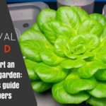 How-to-start-an-aquaponics-garden-Featured-Image