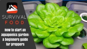 How to Start an Aquaponics Garden: A Beginners Guide for Preppers