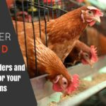 Best Chicken Feeders and Waterers Featured Image