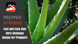 Fast and Easy Aloe Vera Shampoo Recipe for Preppers
