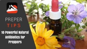 10 Powerful Natural Antibiotics for Preppers