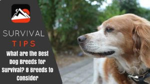 What are the Best Dog Breeds for Survival? 8 Breeds to Consider